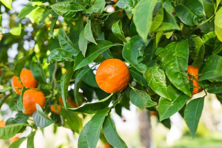 The History of Orange Curacao and Triple Sec